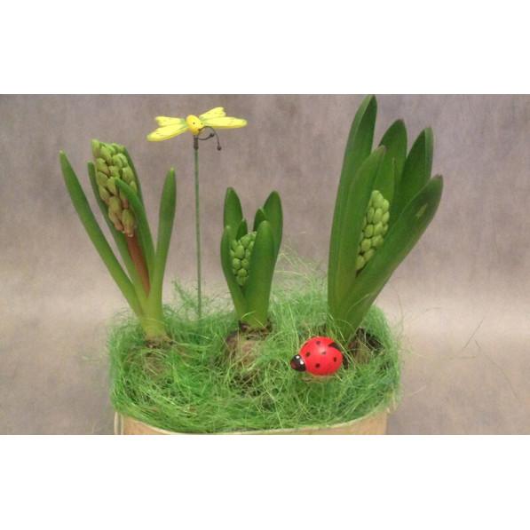 """Композиция из горшечных растений с гиацинтами """"Бабочка"""""""